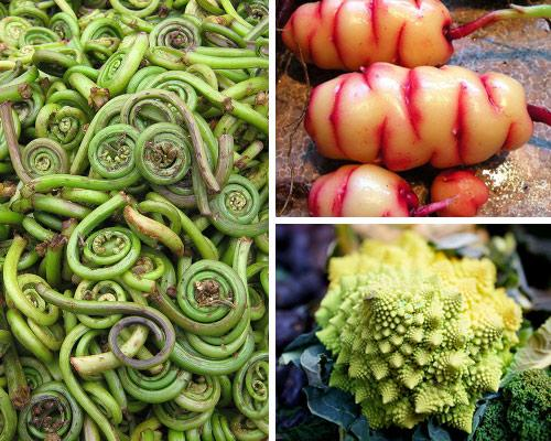 14 VEGETABLES YOU'VE PROBABLY NEVER HEARD OF | PACEM