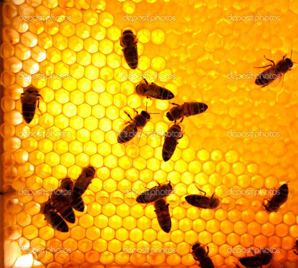 the latest weapon in the war on cancer honey bees pacem