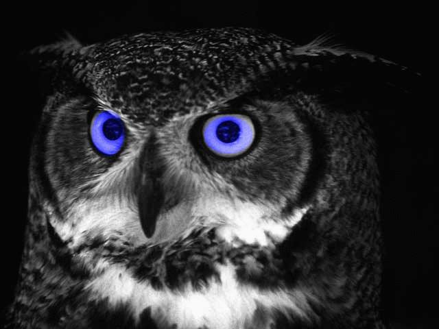 OWL - BB EYES